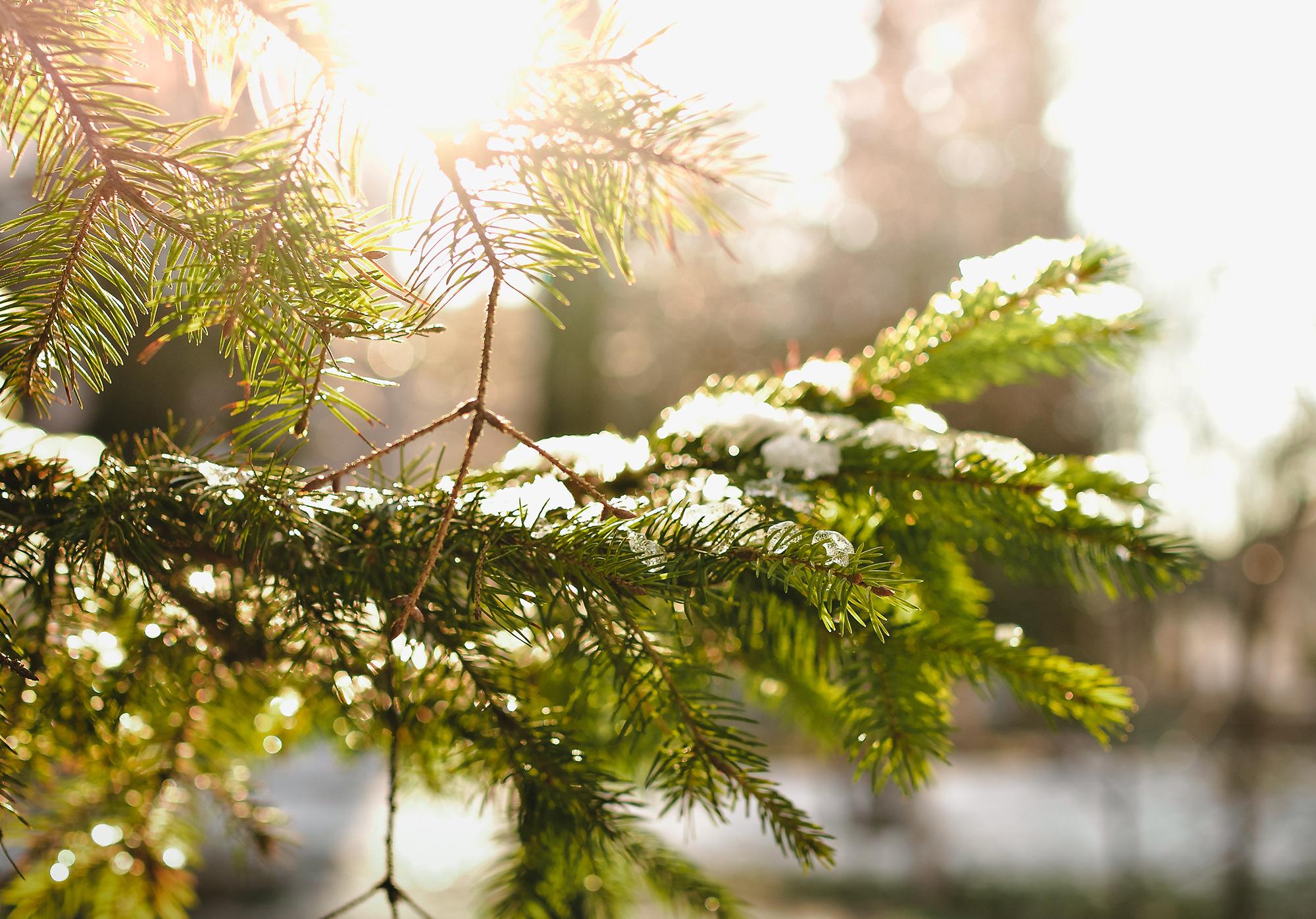 5 Last-Minute Christmas Service Improvements